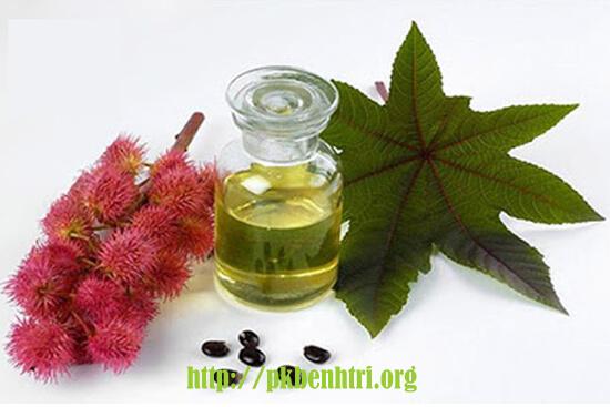 Mẹo vặt chữa bệnh trĩ bằng lá thầu dầu